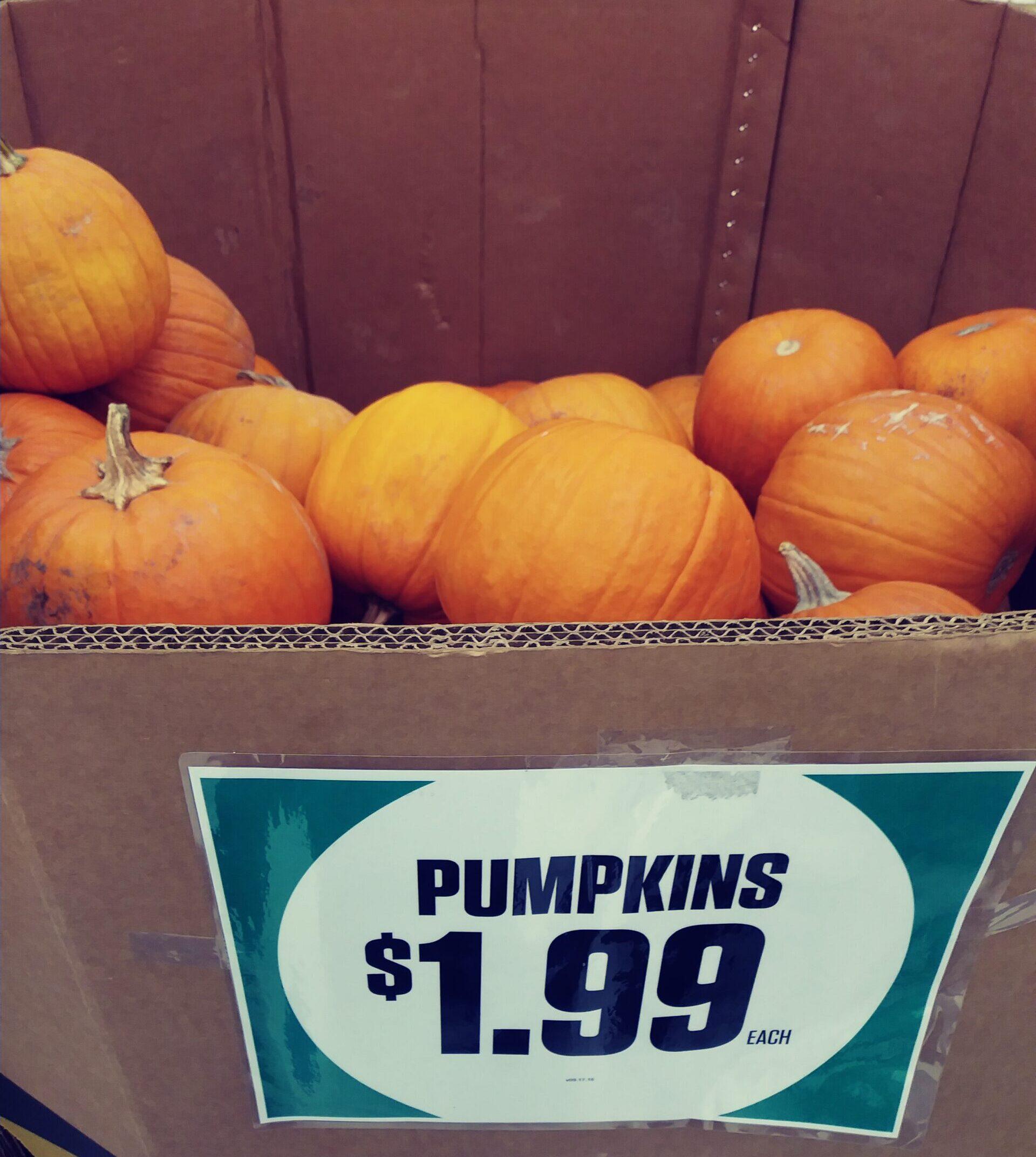 Pumpkins in a bin marked $1.99