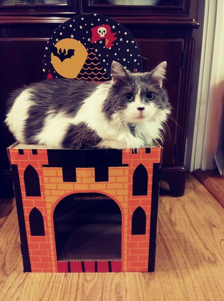 My cat Ace on top of his Target cat scratcher Halloween house
