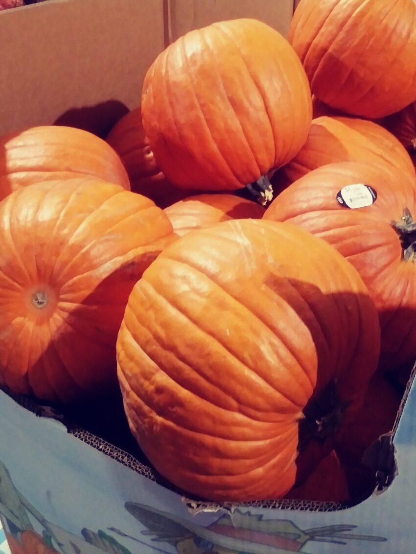 Large Pumpkins