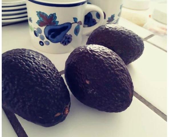 Three avocados next to teacup