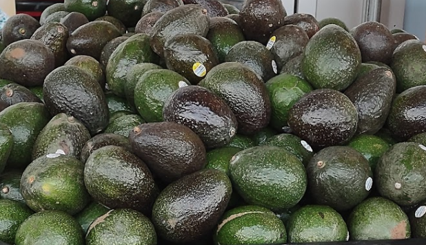 Large pile of jumbo avocados