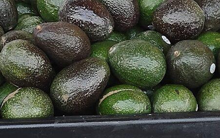 image of closeup of Jumbo Avocados