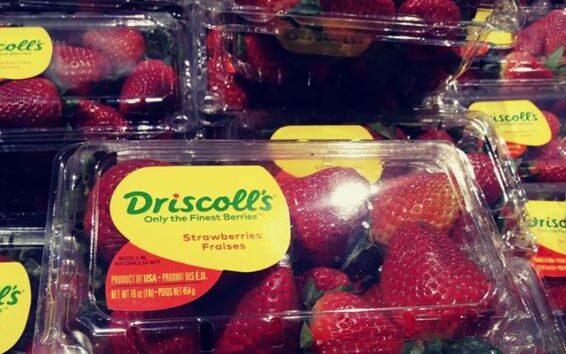 Driscoll Strawberries
