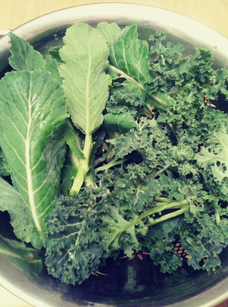 Kale and collards from my garden