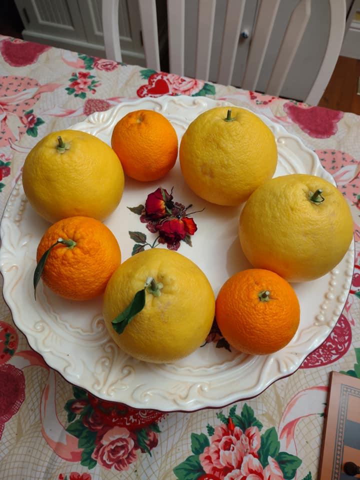 Oranges and grapefruits on a cake pedestal