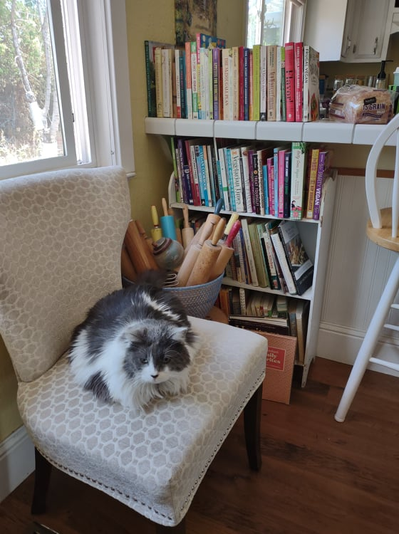 My cat Ace sitting on a chair next to my shelf wioth cookbooks and basket of rolling pins