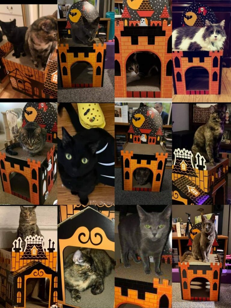 Halloween cat scratcher houses with Penny Pantry members cats collage